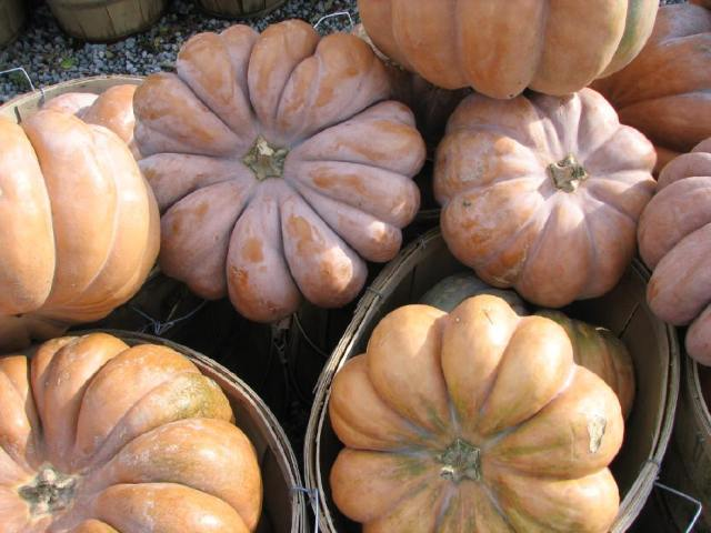 pumpkins | home sweet blog